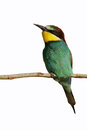 European Bee-eater (Merops Apiaster). Stock Images - 46420154