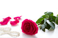 Red Rose Stock Images - 46457374