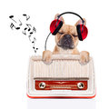 Dog   Relax Music Stock Photo - 46542940