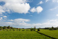 Green And Gold Fields, Blue Skies Royalty Free Stock Photo - 46547535