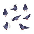 Cartoon Pigeon Actions Stock Photography - 46593672