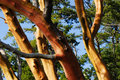 Tree Trunks Royalty Free Stock Images - 4660399