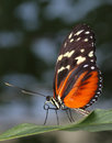 Butterfly Royalty Free Stock Photos - 4662098
