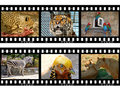 Animals In Frames Of Film Royalty Free Stock Photos - 4663558