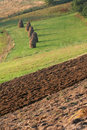 Hay And Furrows On The Acre Stock Photo - 4667030