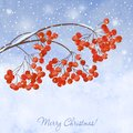 Winter Background With  Branches Rowan Berry Royalty Free Stock Images - 46603239
