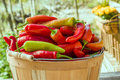 Hot Banana Peppers In Basket Stock Image - 46606651