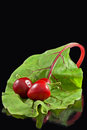 Three Chillies On Leaf Stock Image - 46637111