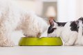 Dog And Cat Eating Food From A Bowl Stock Photo - 46640500