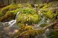 Small Creek In The Forest Surrounded By Moss Royalty Free Stock Photography - 46647757