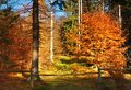 Autumn Forest. Closed Way With Old Wooden Fence And Bar. Colorful Leaves On Trees, Royalty Free Stock Image - 46695006