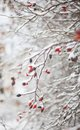 Red Berries,winter Nature With A Snowfall Royalty Free Stock Photo - 46700025