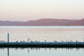 Dock Pier With Seagulls Stock Images - 46724584