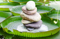 Victoria, Amazon Water Lily Leaves With Stone Tower Stock Image - 46766551
