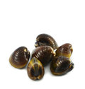 Shellfish Clams Royalty Free Stock Photography - 46781477