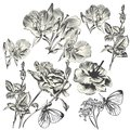 Collection Of Vector Hand Drawn Flowers For Design Stock Photos - 46800253