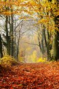 Autumn, Fall Forest. Path Of Red Leaves Towards Light. Royalty Free Stock Photography - 46805387