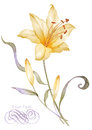 Watercolor Illustration Flower In Simple Background Royalty Free Stock Image - 46821736