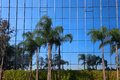 Palm Trees With Glass Building Royalty Free Stock Images - 46876419
