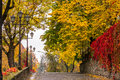 Autumn Cityscape After Rain, With Yellowed Trees And Street Lamp Stock Images - 46888404