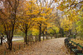 Autumn Alley In Park Stock Image - 46904781