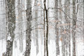Heavy Snowfall In Michigan Woods Royalty Free Stock Photo - 46927275