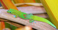 Gecko In The Garden Royalty Free Stock Images - 46932799