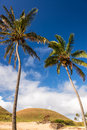 Palm Trees And Moai Stock Photography - 46981532