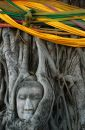 Buddha Head Surrounded By Roots Stock Image - 479491