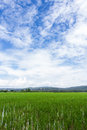 Green Rice Field With Beauty Sky In Thailand Royalty Free Stock Images - 47002069