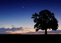 Alone Tree In The Field Royalty Free Stock Photography - 47002807