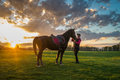 Girl And Horse Stock Photo - 47005940