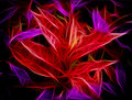 Glowing Red Purple Leaves Abstract Royalty Free Stock Photos - 47038288