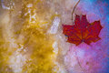Abstract, Leaf From A Tree In A Colorful Frozen Royalty Free Stock Photo - 47042355