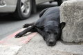 Stray Dog Rests On A City Street Royalty Free Stock Photography - 47050107
