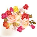 Beautiful Vector Roses Painted In Watercolor Vintage Style Stock Photos - 47087313