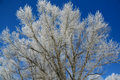 Hoar Frost On  Trees Stock Image - 4718821