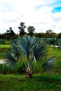 Palm Garden Royalty Free Stock Image - 47108926