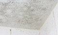 Ceiling Mould Mildew Royalty Free Stock Photo - 47111195