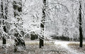 Snow Covered Branches In The Autumn Forest Royalty Free Stock Photography - 47121427
