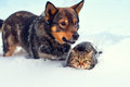 Dog And Cat In Snow Royalty Free Stock Image - 47138576