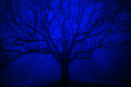 Surreal Tree In Winter Blue Fog Royalty Free Stock Image - 47146276