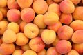 Apricots Royalty Free Stock Images - 47151449