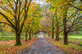 Alley With Trees In Autumn In Snowdonia National Park In Wales Royalty Free Stock Image - 47157506