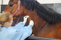 Veterinarian Doctor With Horse Stock Images - 47175144