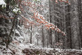 Last Red Leaves Covered In Snow Stock Photography - 47175202