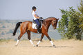 Rider On Bay Dressage Horse, Going Trot Royalty Free Stock Photo - 47175215