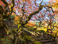 Colorful Maple Leaves Along A Flight Of Stairs Stock Photos - 47178983