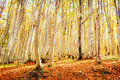 Forest Lanscape Royalty Free Stock Photography - 47206227