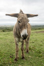 Donkey With Long Ears Stock Images - 47208134